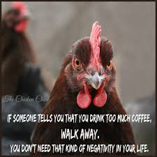Too Much Coffee Meme - flock focus friday 4 22 16 spring happenings the chicken chick