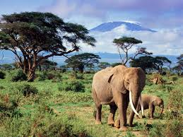 elephant hd wallpapers