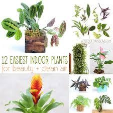 grow beautiful indoor plants in glass bottles a piece of rainbow