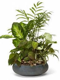 buy home decor plants online u2013 season u0027s