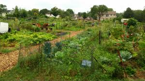 community gardens in the area of the backyard initiative a