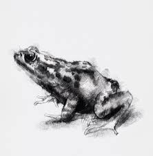 one of my sketch a day drawings spring frog drawing frog sketch