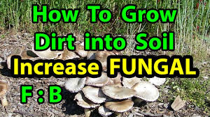 how to grow dirt to healthy soil in no till homesteading vegetable