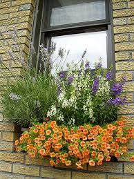 Plants For Winter Window Boxes - small space solutions windowboxes