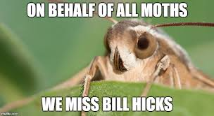 Moth Meme - image tagged in moth imgflip