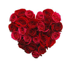 roses for valentines day should you buy chocolate or flowers for s day the