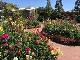 Southern California Botanical Gardens by The Enchanting Oasis In Southern California That Is Right Out Of A