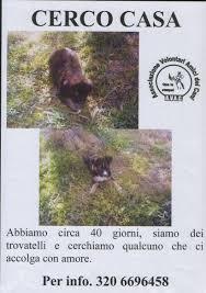 cani in cerca di casa sito istituzionale comune di dolianova provincia di cagliari