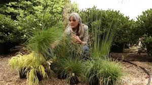 the best ornamental grasses for shade