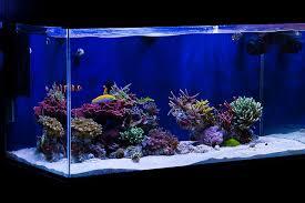 Live Rock Aquascaping Tips For Awesome Aquascapes Saltwater Aquarium Advice