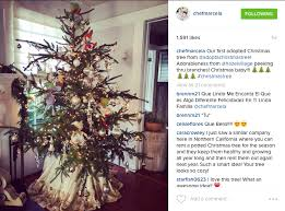 celebrity love adopt a christmas tree