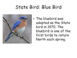 New York birds images New york state facts jpg
