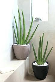 plantes dans la chambre plantes pour chambre plante verte salle de bain plante verte chambre