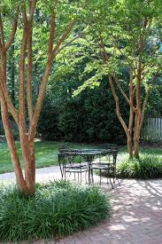 Small Trees For Backyard by Best 25 Patio Trees Ideas On Pinterest Patio Ideas Outdoor