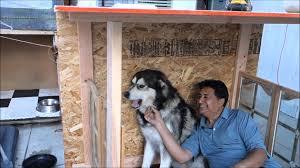 Indigo Dog House Pet Gates Dog Wood Online Gate Extensions Haammss