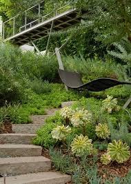 great design plant aeonium