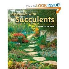amazon succulents 35 best succulent projects images on pinterest succulents garden