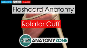 Anatomy Of Rotator Cuff Rotator Cuff Flashcard Anatomy Youtube