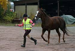 How To Tell If A Horse Is Blind Lameness Equine Wikipedia