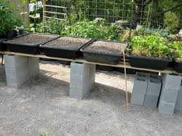 How To Design Your Backyard Part 2 How To Design Your Own Miniature Fruit Garden Abundant