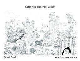 desert owl coloring page desert animals coloring pages desert animals to color desert