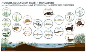 how do we measure aquatic ecosystem health nwt water stewardship