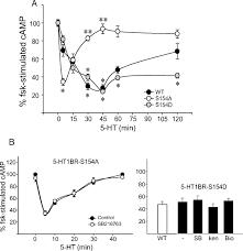 regulation of serotonin 1b receptor by glycogen synthase kinase 3