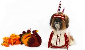 16 best thanksgiving clothes and costumes for the
