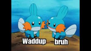 mudkip meme pokémon amino