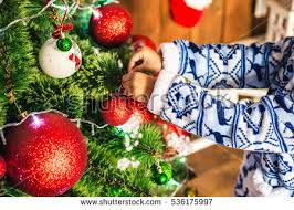 african christmas tree stock images royalty free images u0026 vectors