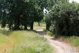 file country path with trees at woodland trust wood theydon bois