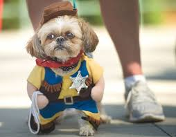 Funny Halloween Animal Costumes 234 Pet Costumes Images Pet Costumes