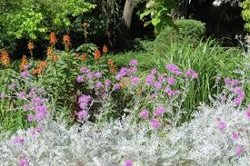 australian garden flowers old notes from the gardens friends of burnley gardens
