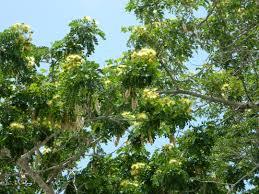photo essay florida keys part 4 u2013 flora and fauna