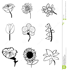 flower sketches hand drawn ink common everyday flowers 31173453