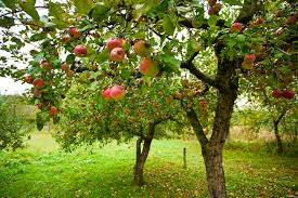 Fruit Tree Garden Layout Planning A Small Home Orchard Co Op Stronger Together