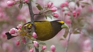 most beautiful spring bird mt wallpapers