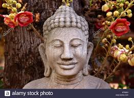 buddha and the bodhi tree stock photo 125240949 alamy