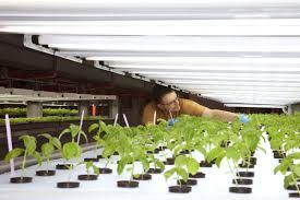 crop rotation tips for vegetable gardens