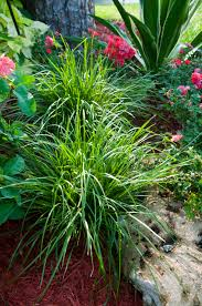 native florida plants low maintenance ozbreed new plant spotlight drought tolerant plants for florida