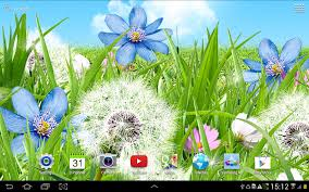 summer flowers wallpaper android apps on google play