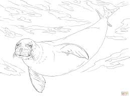monk seal coloring page free printable coloring pages