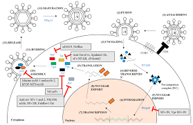molecules free full text review of current cell penetrating also