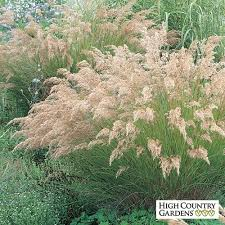 89 best landscape decorative grasses images on