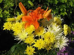 uses of flowering plants world of flowering plants