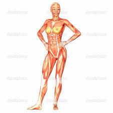 anatomy human body systems human anatomy chart