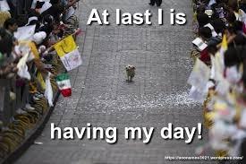 Dog Lover Meme - dog lovers meme anonamos3021