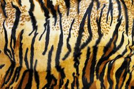 tiger bathroom designs images about tiger print on pinterest stripes and tigers idolza