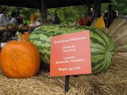 New York Botanical Garden Pumpkin Carving by Giant Pumpkin Carving Weekend At New York Botanical Gardens New