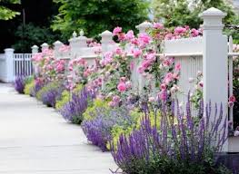 Easy Landscaping Ideas For Front Yard - 479 best perennials and rock gardens images on pinterest
